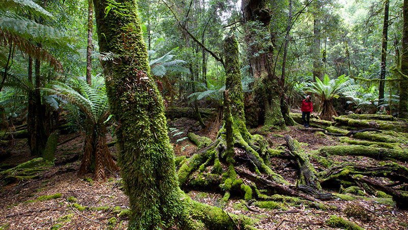 Exploring the Tarkine by Pete Harmsen