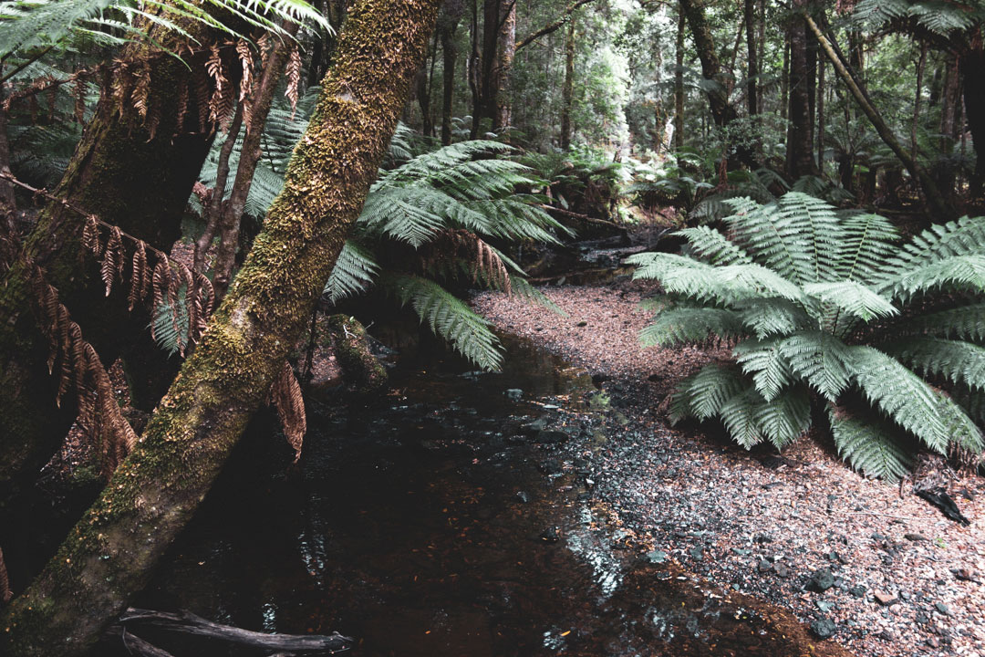 Tarkine Rainforest