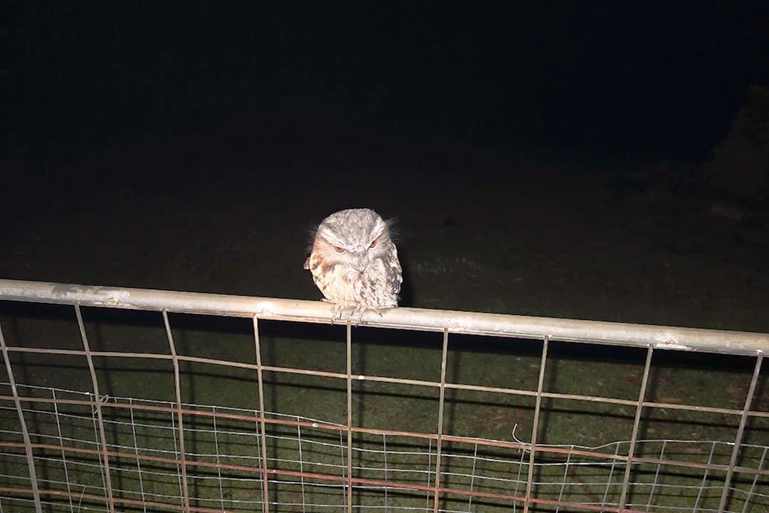 Owl at Black Bluff View Retreat
