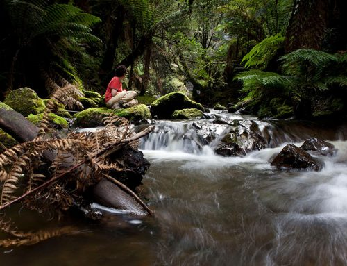 Small Tarkine Rainforest Stream