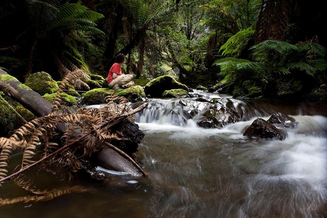 Small Tarkine Rainforest Stream