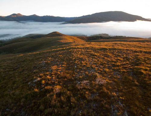 Tarkine Beauty
