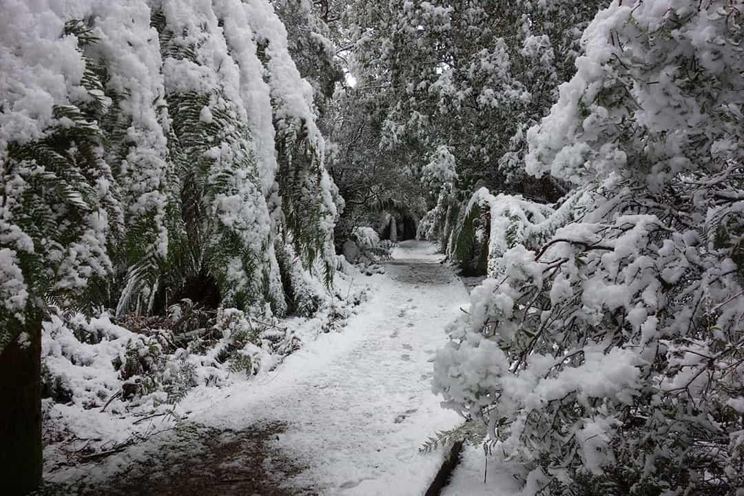 Trail in Winter